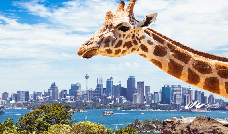 taronga zoo sydney australie