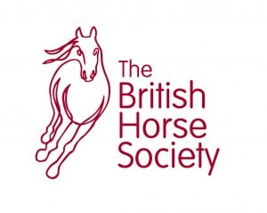 british horse society séjour linguistique équitation