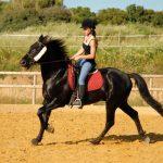 Séjour linguistique équitation